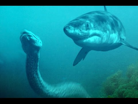 Shark Vs Python #HD