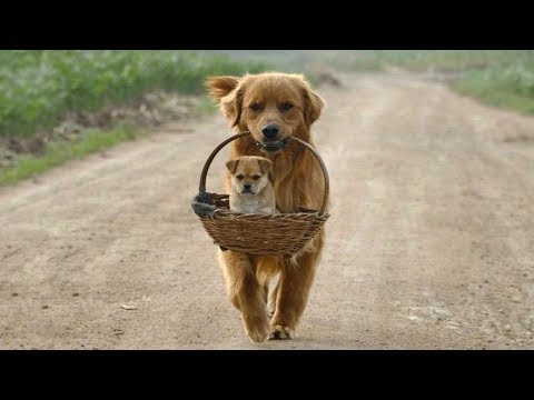 Funny cat videos - Cute is Not Enough - Funny Cats and Dogs Compilation #143