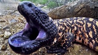 Video Most VENOMOUS Animals Known To Man! MP3, 3GP, MP4, WEBM, AVI, FLV September 2018