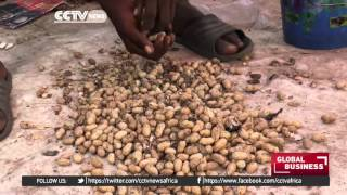 Over the years, Senegal has managed to wriggle its way up the food chain to become one of the world's largest producer of...