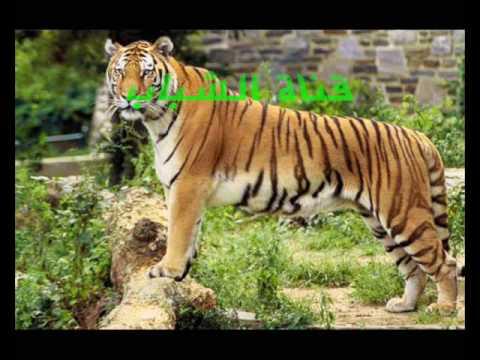 اعلان النمور 2  اعلانات تلفزيون الشباب قديمآ