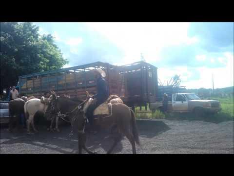 2º Cavalgada em Prol 6º Leilão Direito de Viver Gurinhatã (20/04/14)