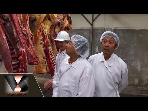 Phóng sự :  Thăm hãng thịt ngựa, trâu, nai và bò Canada | Vân Sơn in Canada | Show hè trên xứ lạnh - Thời lượng: 27:09.