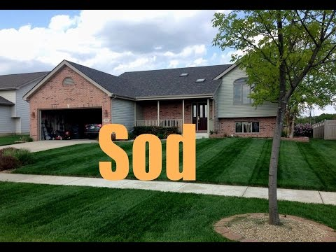how to fertilize new sod