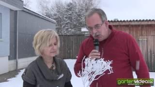 #916 Weihnachtsdekoration - Dekomaterial mit Pflanzen und Schneespray (Sprühschnee)