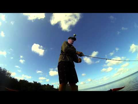 Sight fishing a little redfish with live mullet out of the predator 13! - kayak fishing, kayak photos, kayak videos