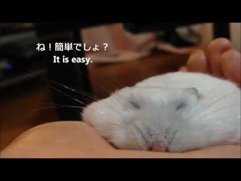 How to Make a Thin Hamster Video