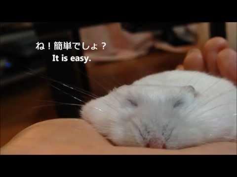 如何製作一隻超薄的倉鼠?