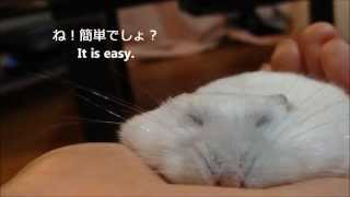 How To Make Thin Hamster