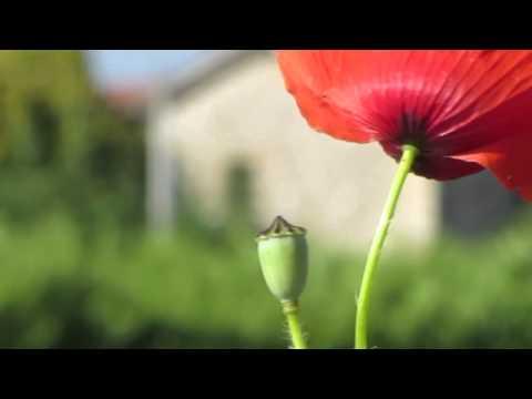 musica rilassante e romantica per pianoforte - Adagio in C Major - Lorenzo Tempesti