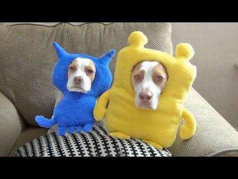 beagle life!