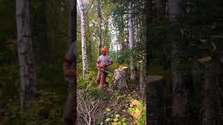5. Fun at work big Birch ms 291
