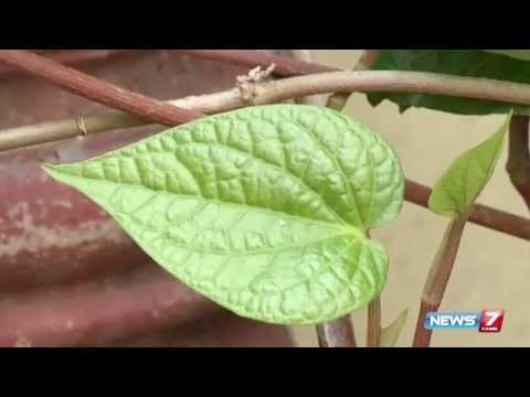 Vetrilai (Betel Leaves) Is Used To Remove Dandruff | Poovali | News7 Tamil |