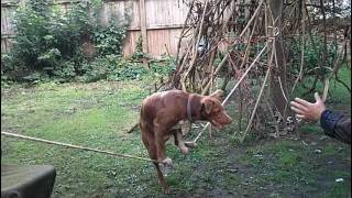Acrobatic Dog Training