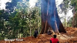 Video Pohon Raksasa Ini Robohnya Melompat Jauh Dari Tonggaknya MP3, 3GP, MP4, WEBM, AVI, FLV Januari 2019