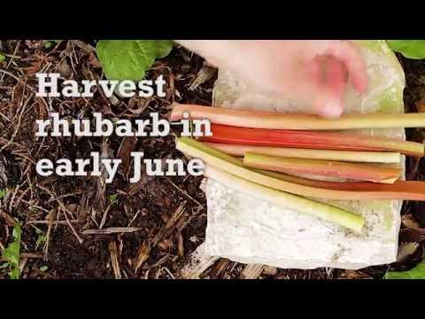 Savor Door County - Rhubarb Cobbler