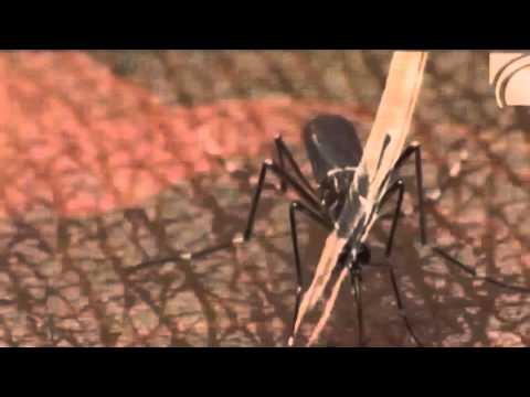 Zika Virus in Spanien