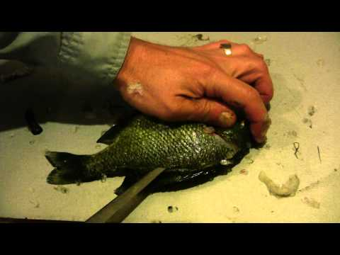 How to Fillet a Sunfish or any Panfish – Sunfish and Panfish Cleaning