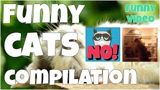 Funny cats compilation by 7 seconds of happiness FUNNY Video ▶ Thank you for watching this video! If you like it, please, put likes 👍, comments & subscribe to my channel for updates: https://www.youtube.com/channel/UCxSIy_SyK0L8NVVZevNkKew/about?sub_confirmation=1▶ New Best Short Funny Videos all the time: https://www.youtube.com/watch?v=MRtISYYK5uo&index=25&list=PLWUagoeqmhs7r_2QGP9kgn6ZsuFP-mcINWelcome to ★ 7 seconds of happiness ★ best short funny videos channel!!!FOLLOW ME:▶ Google+:  https://plus.google.com/u/1/+Jo7secondsofhappiness▶ Twitter: https://twitter.com/djidjio369▶ Facebook: https://www.facebook.com/7seconds.of.happinessIf you see a clip that you own that you did not submit or give consent for use, we have likely received false permissions and would be happy to resolve this for you! ☆•*•.¸¸. HAPPINESS ☆•*•.¸¸☆•*´¨`*☆•.¸¸.╔╗┼║║┼┼╔══╦═╗╔═╦══╗║║┼╔╣╔╗╠╗║║╔╣║═╣║╚═╝║╚╝║║╚╝║║║═╣╚═══╩══╝╚══╝╚══╝☆ ☜♡☞ Love is everything ☆•*•.¸¸☆•*´¨`*☆•.¸¸.----#7secondsFunnyVideos, #7SecondsOfHappiness, #7secondsVideos, #7secondVideo, #FunnyVideo