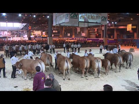 Concours de la race Parthenaise (2/2)