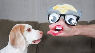 Dogs vs Funny Hand Faces: Funny Dogs Maymo & Potpie by Maymo