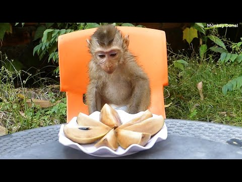 Pity Monkey!! Donal Not Want To Eat Anything