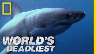 World's Deadliest - Shark Superpowers