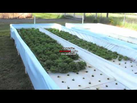Medium sized Nelson and Pade aquaponic hydroponic raceways