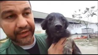 Agradecemos o imenso carinho que toda a equipe da SUIPA têm pelos animais. Agradecemos principalmente à você ASSOCIADO AMIGO!!! Este vídeo só foi possível gr...