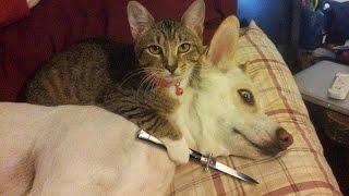 Video Funny Cats vs Dogs Compilation MP3, 3GP, MP4, WEBM, AVI, FLV Mei 2019