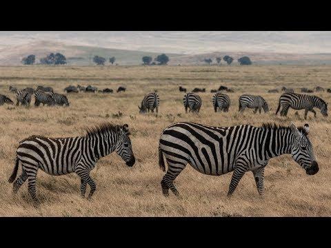 Ngorongoro Crater Landscape Photography | Tanzania