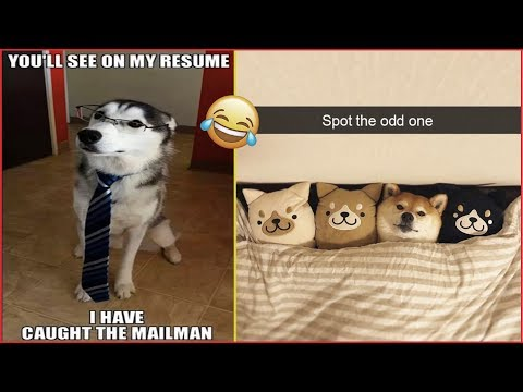 Funny Animals Memes That Will Make You Smile part2