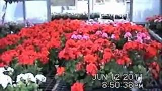 Oswego (NY) United States  city photos : Galletta's Greenhouse of Oswego, NY - 2011 Promotional Video