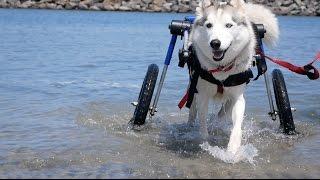 Dog beach/Koda update (Colton Haaker VLOG_39)