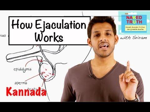 Video How Ejaculation Works - Kannada download in MP3, 3GP, MP4, WEBM, AVI, FLV January 2017