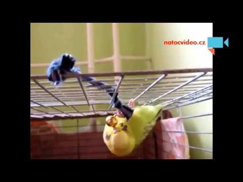 Andulka a její kachní zvuk :-)