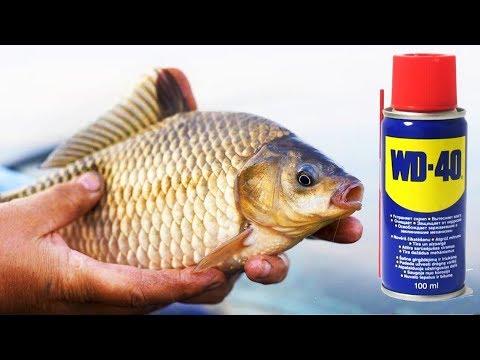 как выглядит приманка для рыбы