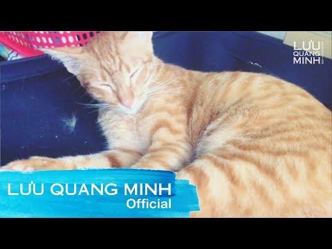 Funny cat videos - MY FUNNY CAT #12  LƯU QUANG MINH VLOG