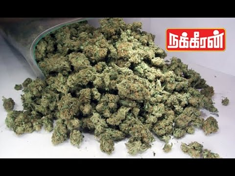 20-lakhs-worth-Ganja-bags-found-in-Trichy-Drug-smuggling-in-home