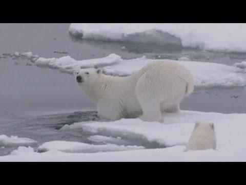 Βόρειος Πόλος: Θερμοκρασία πάνω από το μηδέν !