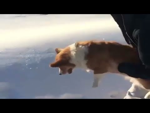 العرب اليوم - شاهد: مقطع يوثّق إلقاء سيدة لكلبها من الطائرة