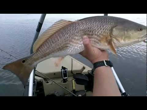 Kayak Fishing Redfish in Delacroix, Louisiana Part 2