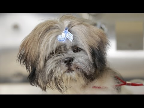 Homeless Dog Gets Makeover That Saves His Life! - Joey