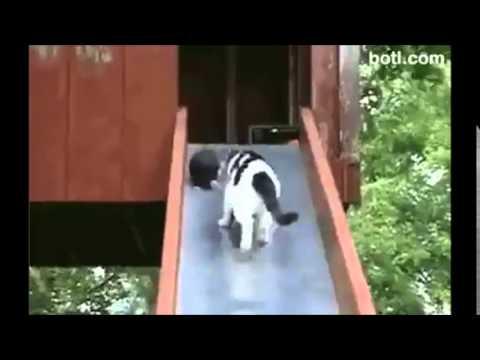 貓媽媽「折返跑」 搶救小貓崽