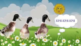 Говорят птицы (голоса птиц). Наши уточки с утра... / Talking birds cartoon.