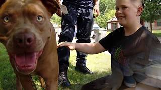 5 Pets Who Saved Their Owners Lives! #2