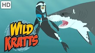 Wild Kratts - Sharp Teeth | Kids Videos