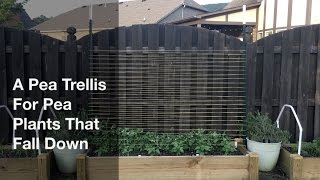 """Previous pea trellises have been problematic in that relatively fragile pea plants don't hold on well to the trellis during strong winds and heavy rain.  Where I live, it gets hot so quickly (zone 8a) that I only get one chance to grow peas.  If a spring storm blows them over, chances are the plant is done for and there just isn't enough time to grow more pea plants before the scorching summer heat.  Using two 7' U posts and mason line (it holds up very well to UV light), I wrapped the line between the posts to give a space for the pea plants to grow, have light and stay protected.  I hope the bumps on the posts prevent the line from falling down the posts.Music: """"Plastic or Paper"""" by Wes Hutchinson"""