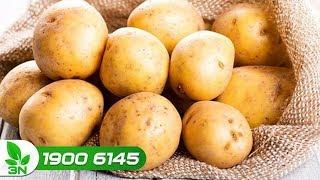Nông nghiệp | Nghịch lý: Khoai tây tươi dư thừa, khoai tây chế biến phải nhập khẩu