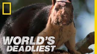 World's Deadliest - Cobra vs. Rat Snake